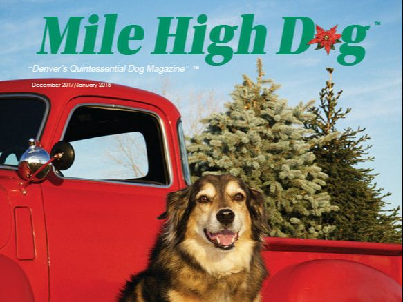 read past issues of Mile High Dog magazine