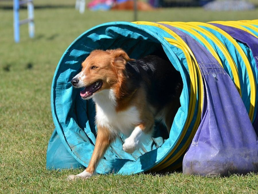 Denver area dog sports and fitness