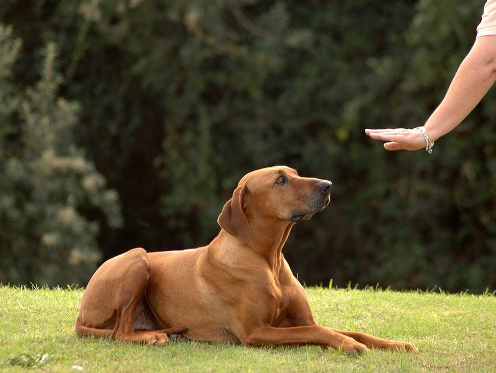 dog behavior and training resources