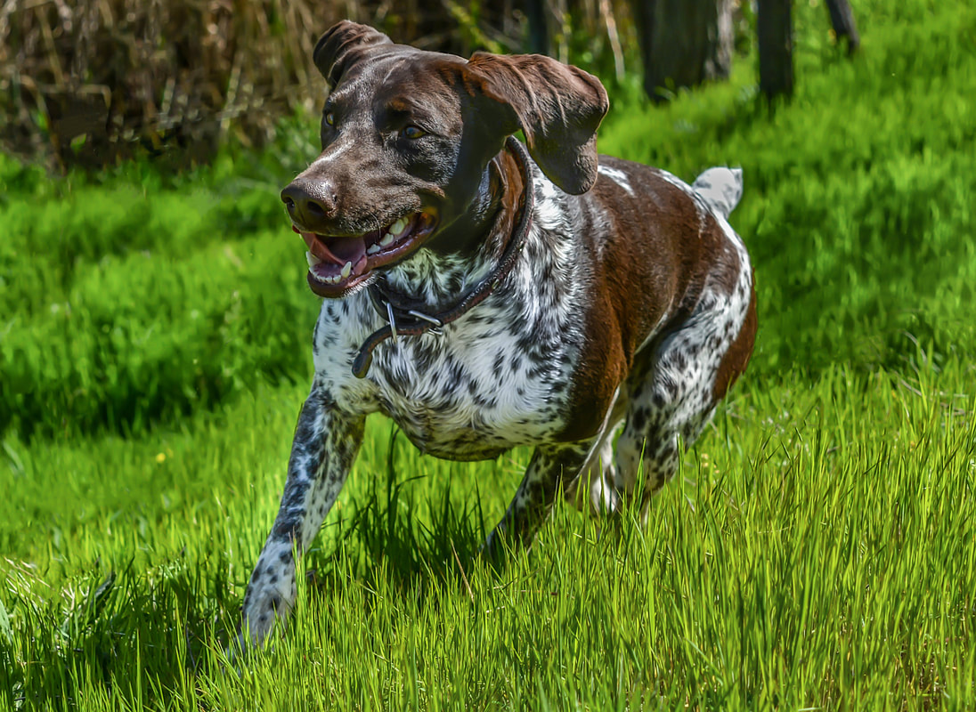 upcoming dog events in Denver and Colorado