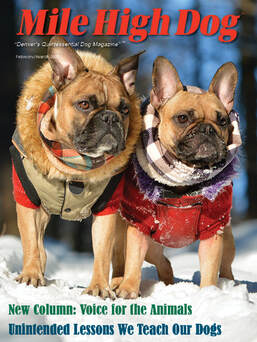 read current issue of Mile High Dog magazine