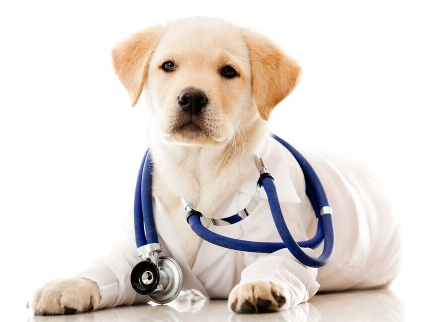 Mile High Dog magazine healthcare articles page